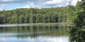Long Pond peaceful image