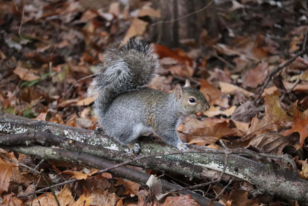 Pay Yourself First. Squirrel collecting nuts.